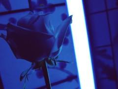 JOI – Amour virtuel (jouis deux fois pour moi!)